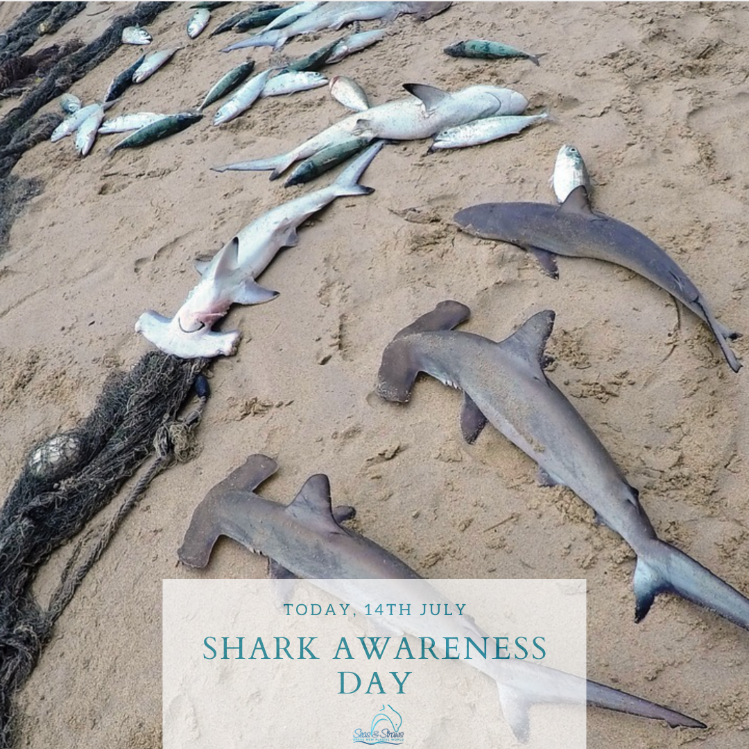 Shark Awareness Day