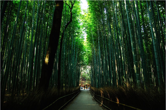 A bamboo forest for a sustainable future