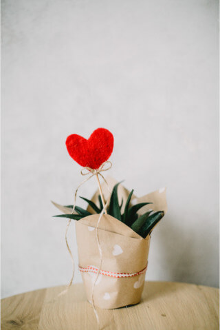 Aloe plant wrapped in paper.
